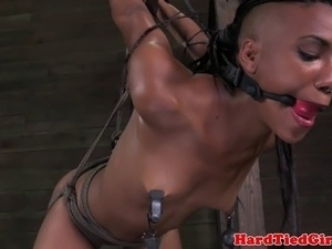 Strappado ebony sub all holes punished with nipple torment
